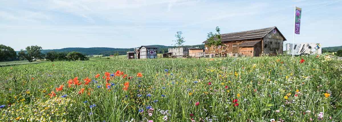 Mohnblüte im Geo-Naturpark Frau-Holle-Land